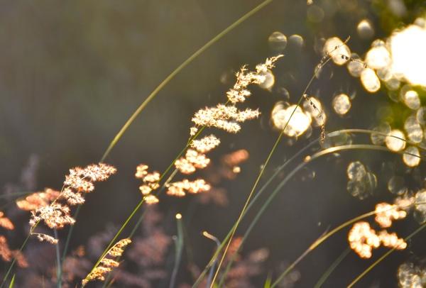 lightbubbles_web.jpg