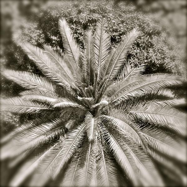 palmfocus_web.jpg