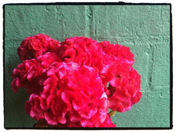 pinkongreen_webversion.jpg