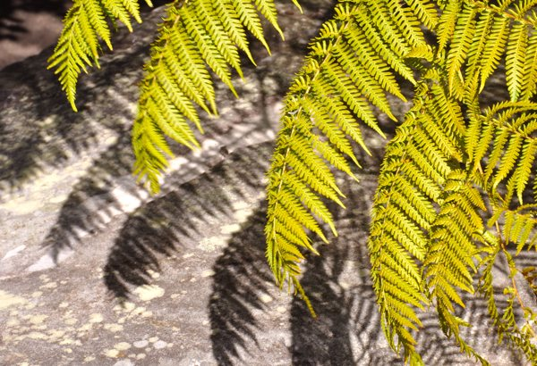 fernsx2_webversion.jpg