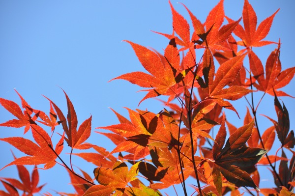 autumnbrilliance_web.jpg