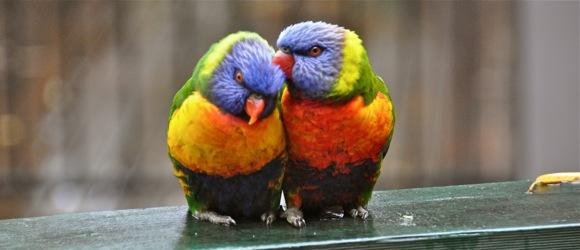 Love in the rain copy.jpg