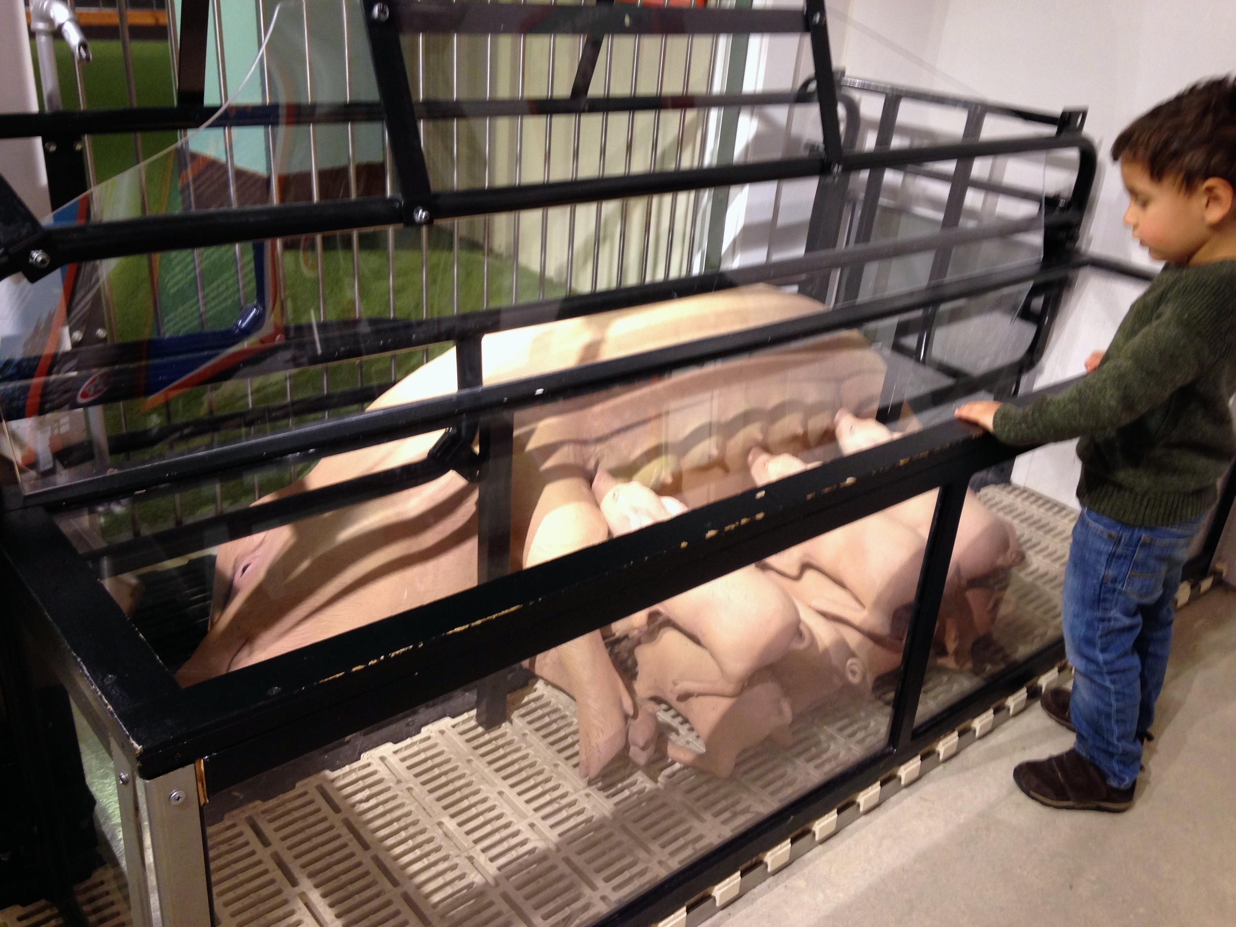 A young visitor looks at a fake sow in a farrowing stall.