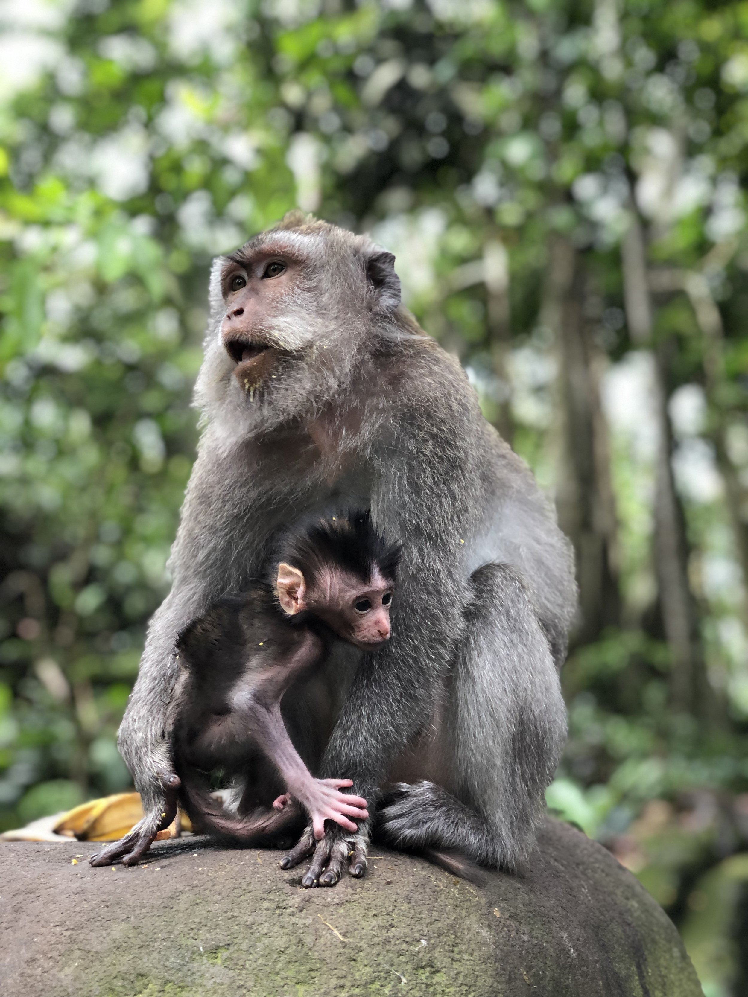 The Monkey Forest, Ubud