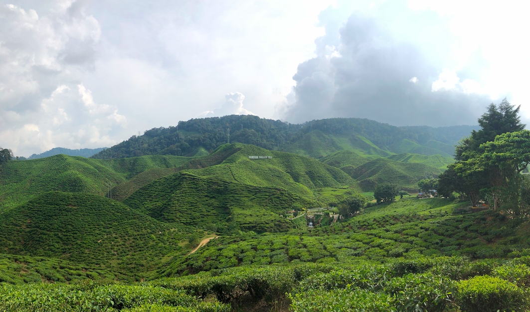 A tea plantation in Cameron Highlands. There are tea houses all over the road that you can stop for some delicious ice tea and scones.
