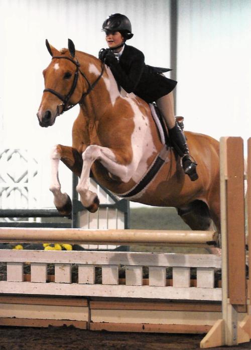 Hank - Hanky Panky               This Horse Has Been Sold