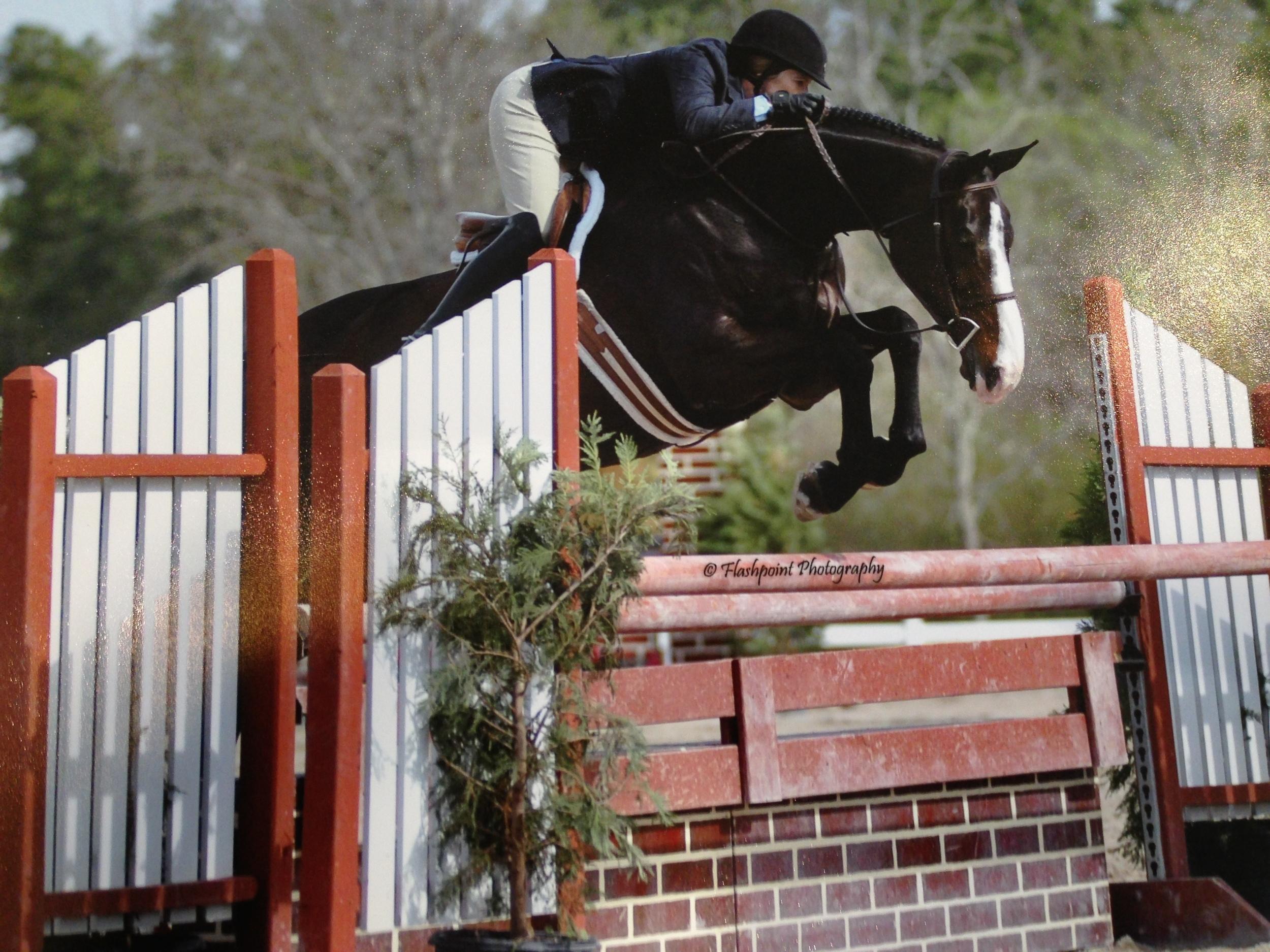 Graefin Ticco - Ticco               This Horse Has Been Sold