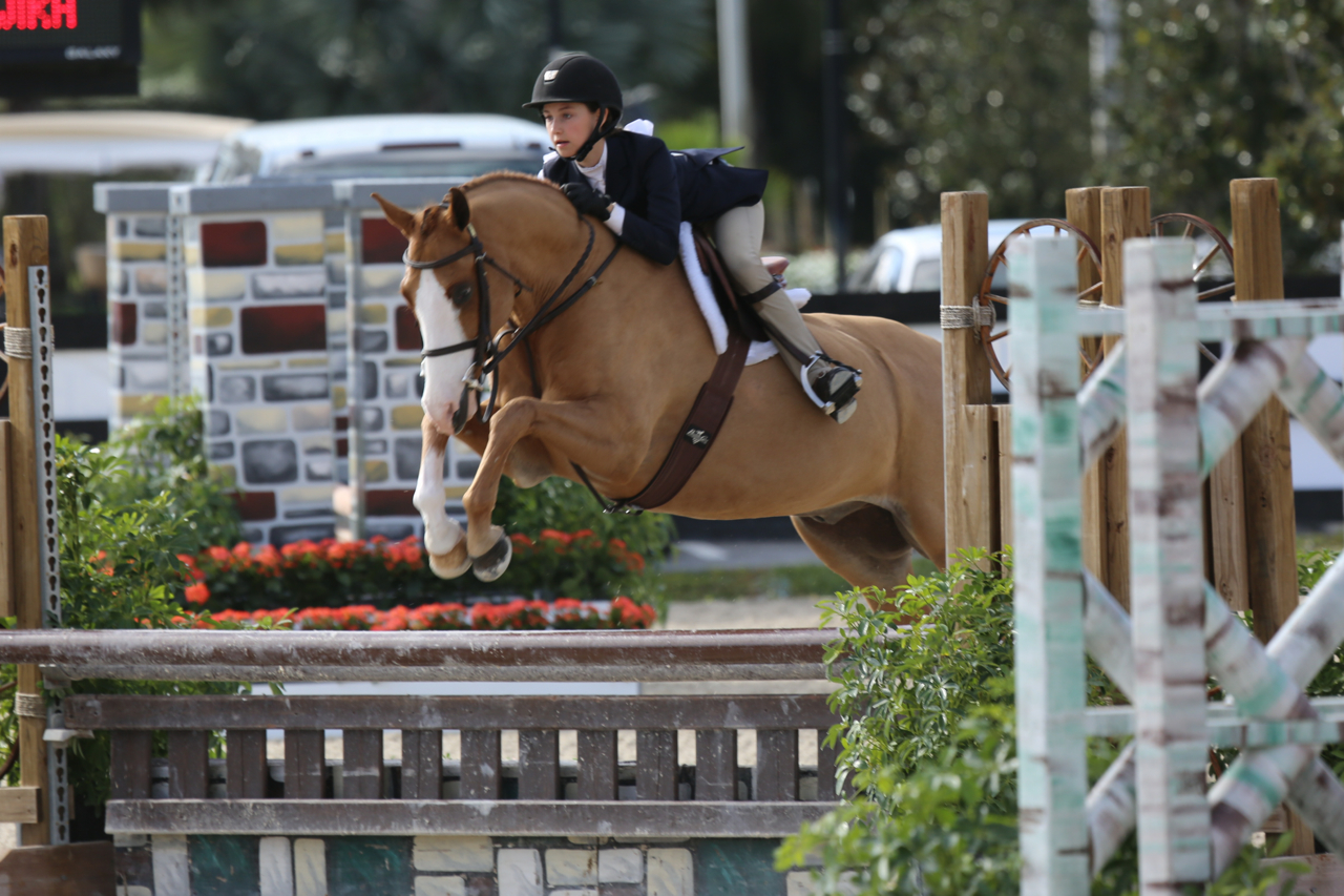 Farmore Royal Design - Bling               This Horse Has Been Sold