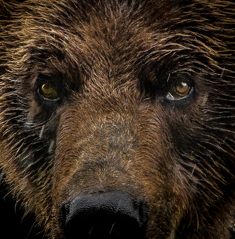 14-Grizzly Bear.jpg
