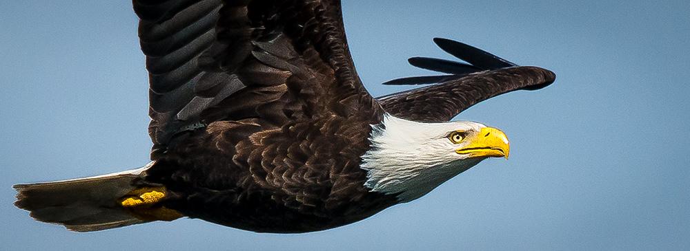05-Eagles-_DSC8543.jpg