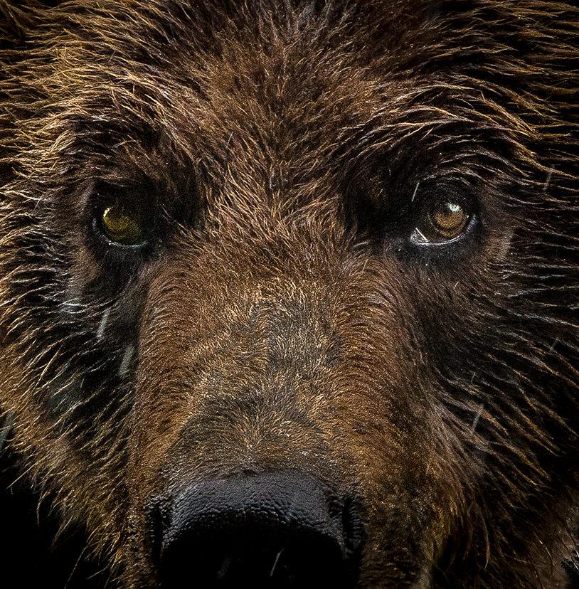 14-Grizzly Bear.jpg