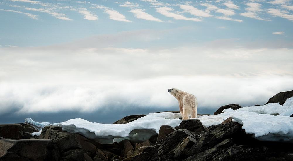 17_Polar Bear-4104.jpg