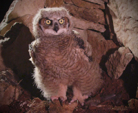 OWL_NATUREPROJECT.png