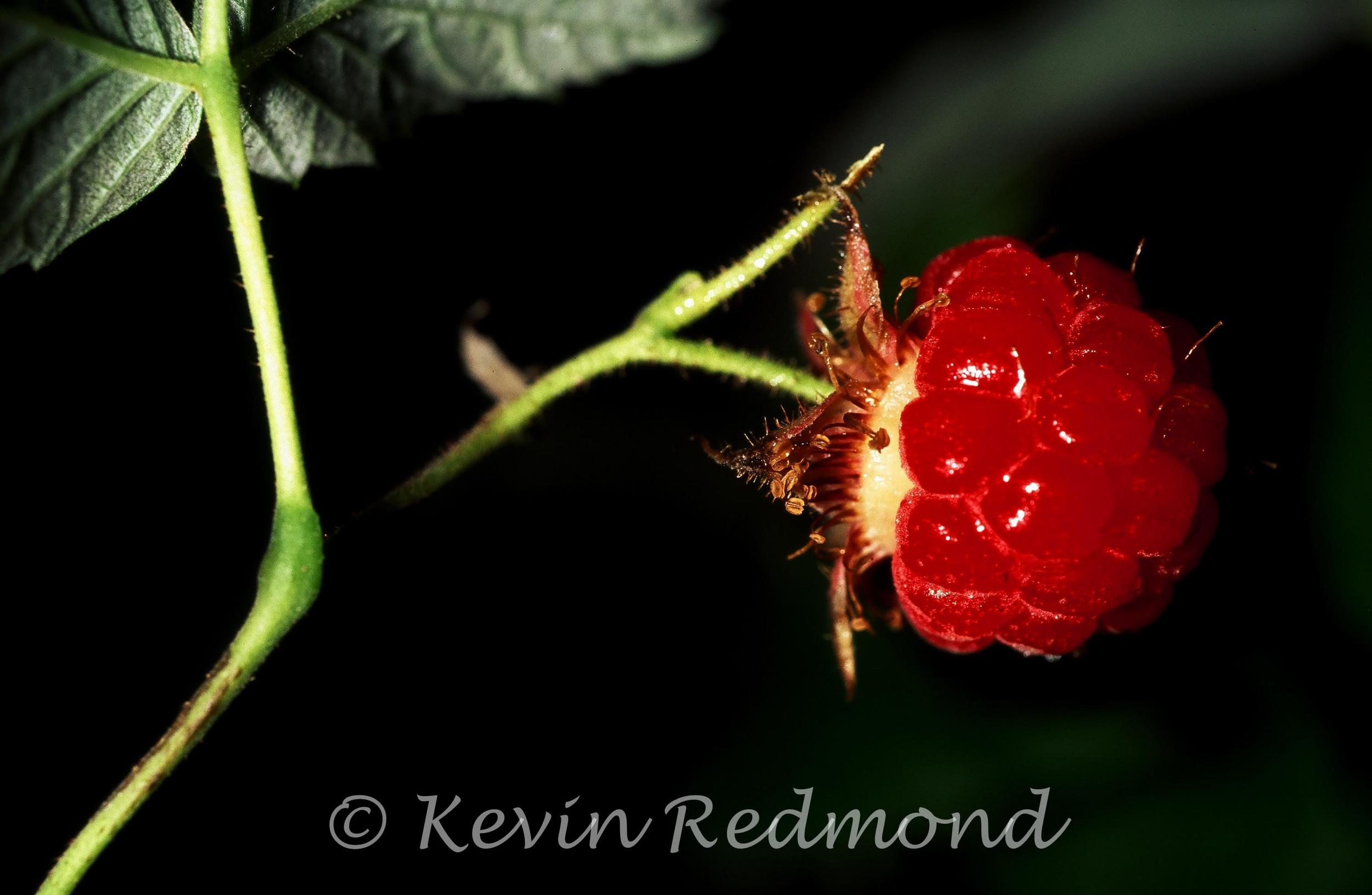Flora1-9.jpg