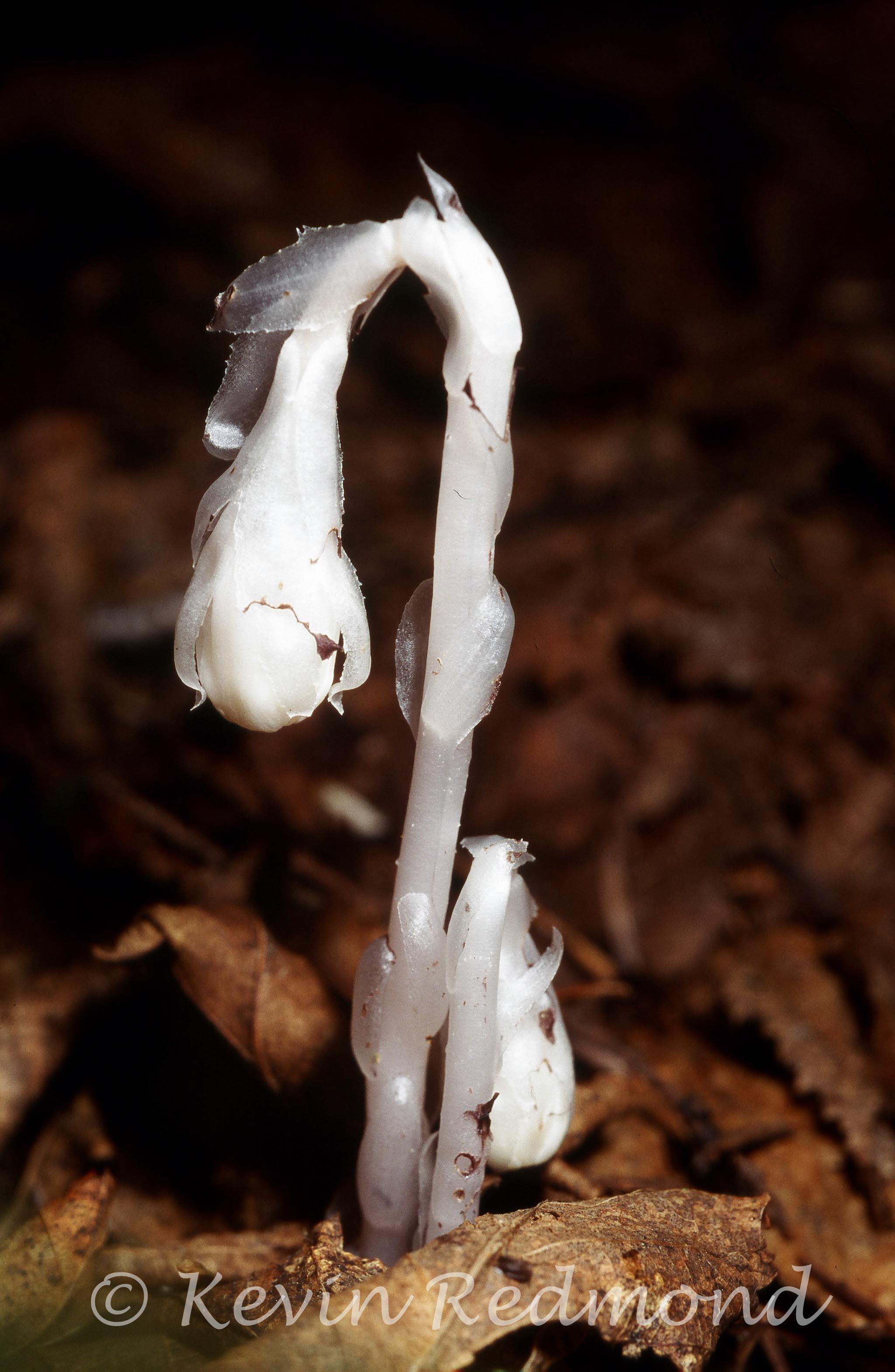 Flora1-7.jpg