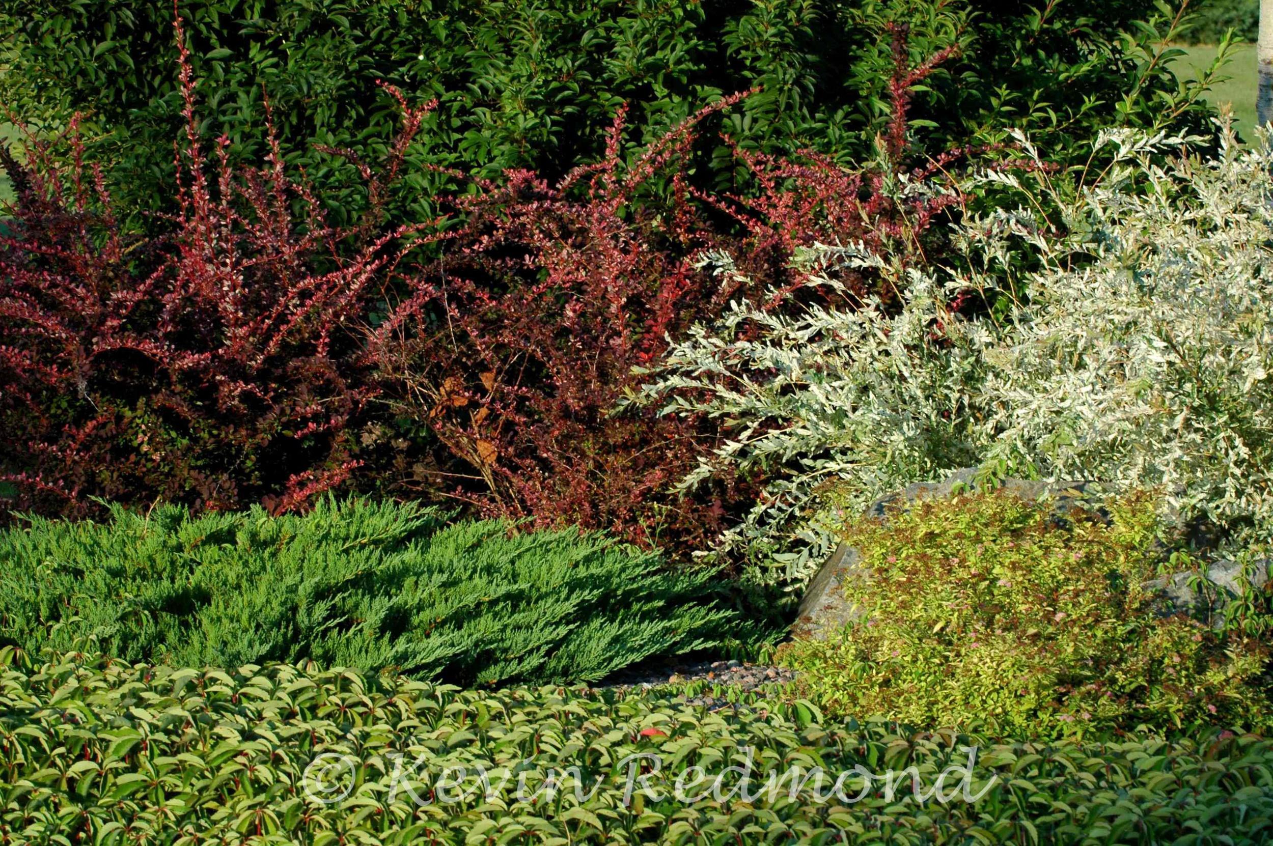 Flora1-5.jpg
