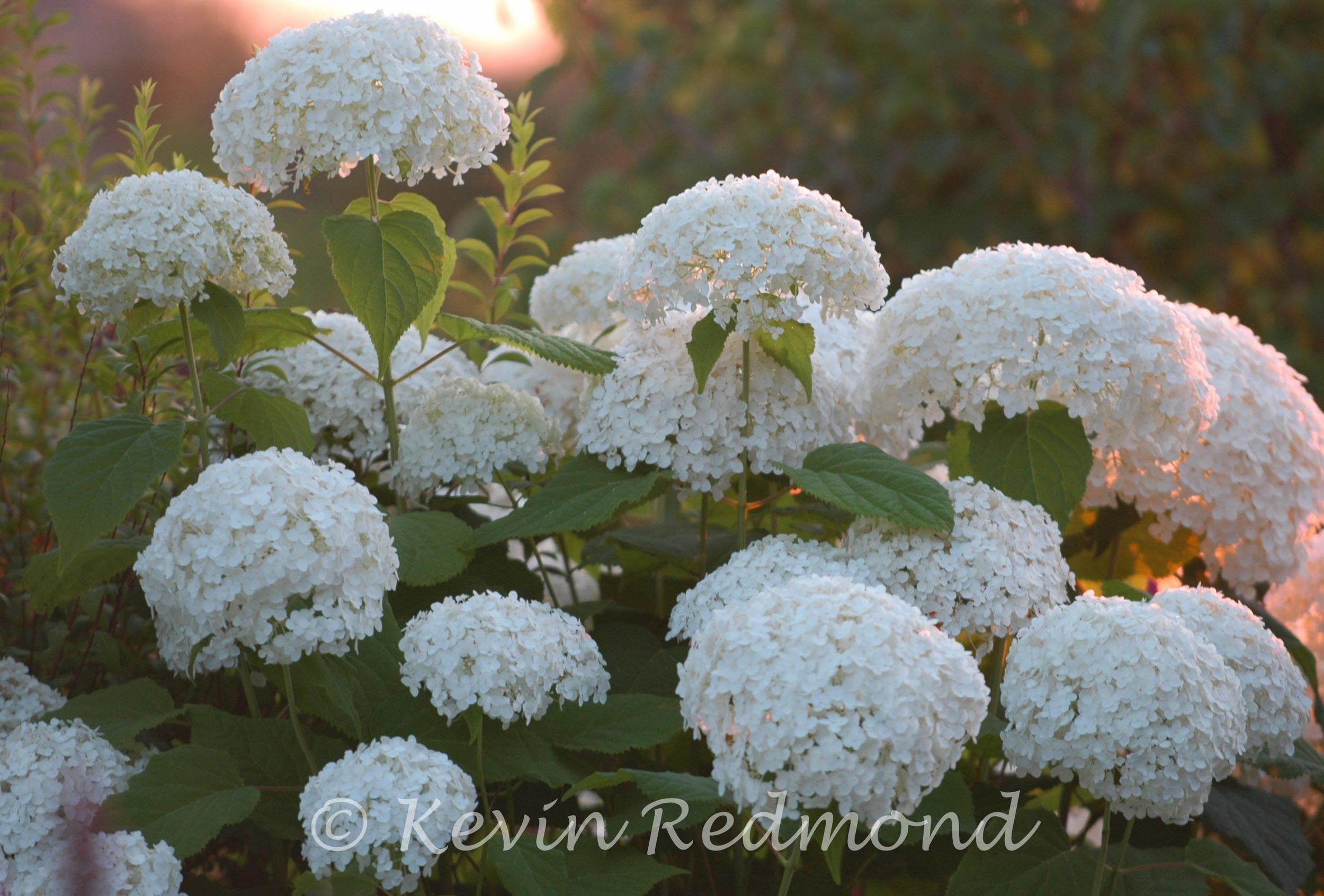 Flora1-3.jpg