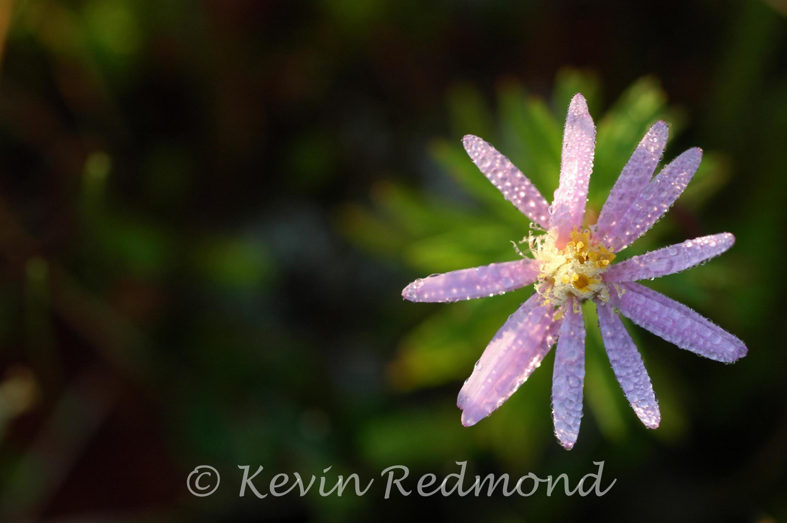 Flora1.jpg