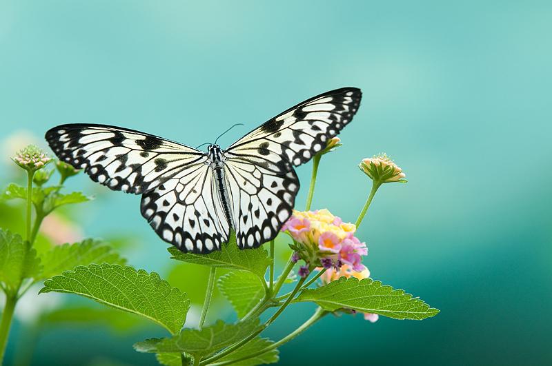 ButterflyOnLeaf_11192420_.png