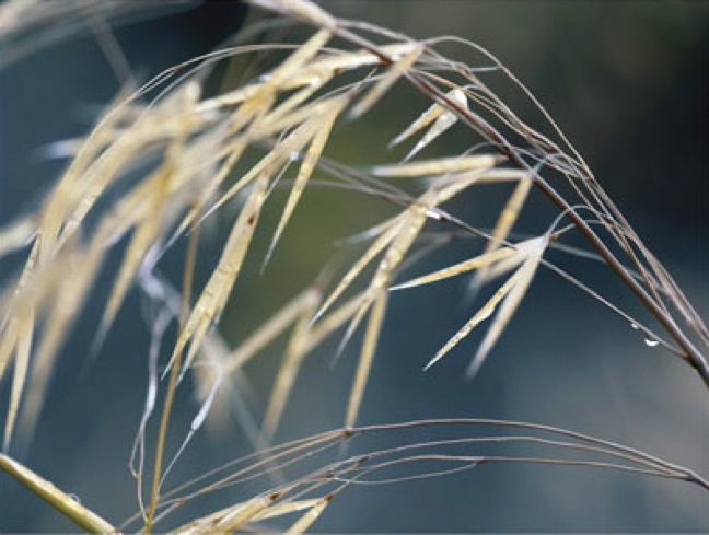 TR11328--Doherty--River_Grasses_II.jpg