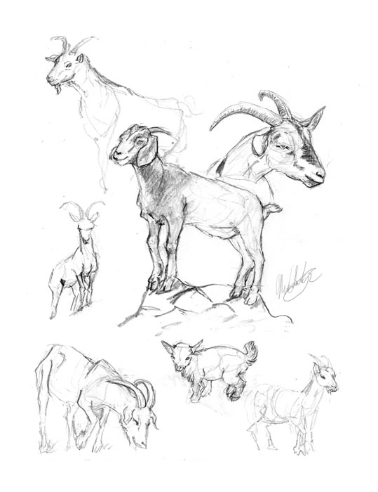 Canales-M_Sketches-8_goats_Web.jpg