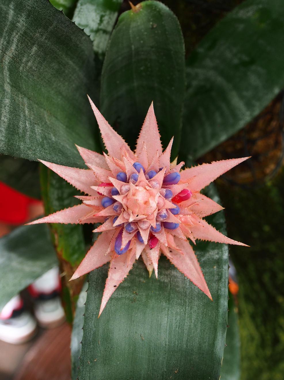 flower burst-01.jpg