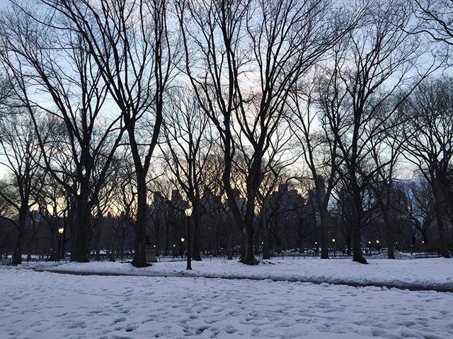 Central Park at 6am heading to the race start corrals.  United Half Marathon.  #sunrise #unitednychalf #halfmarathon #centralpark #nyrr #run #runner #instarunner #running #thingsiseewhilerunning #snow #nyc #pretty #winter