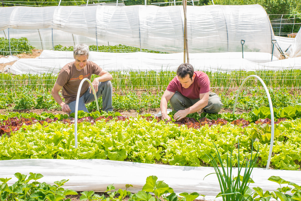 Garden manager Seth Davis (left) instructs Brandon Galford (right) on some of the finer points of maintaining a productive garden. Most of the students who volunteer in the garden have little prior experience so those with more experience gladly take time to teach.