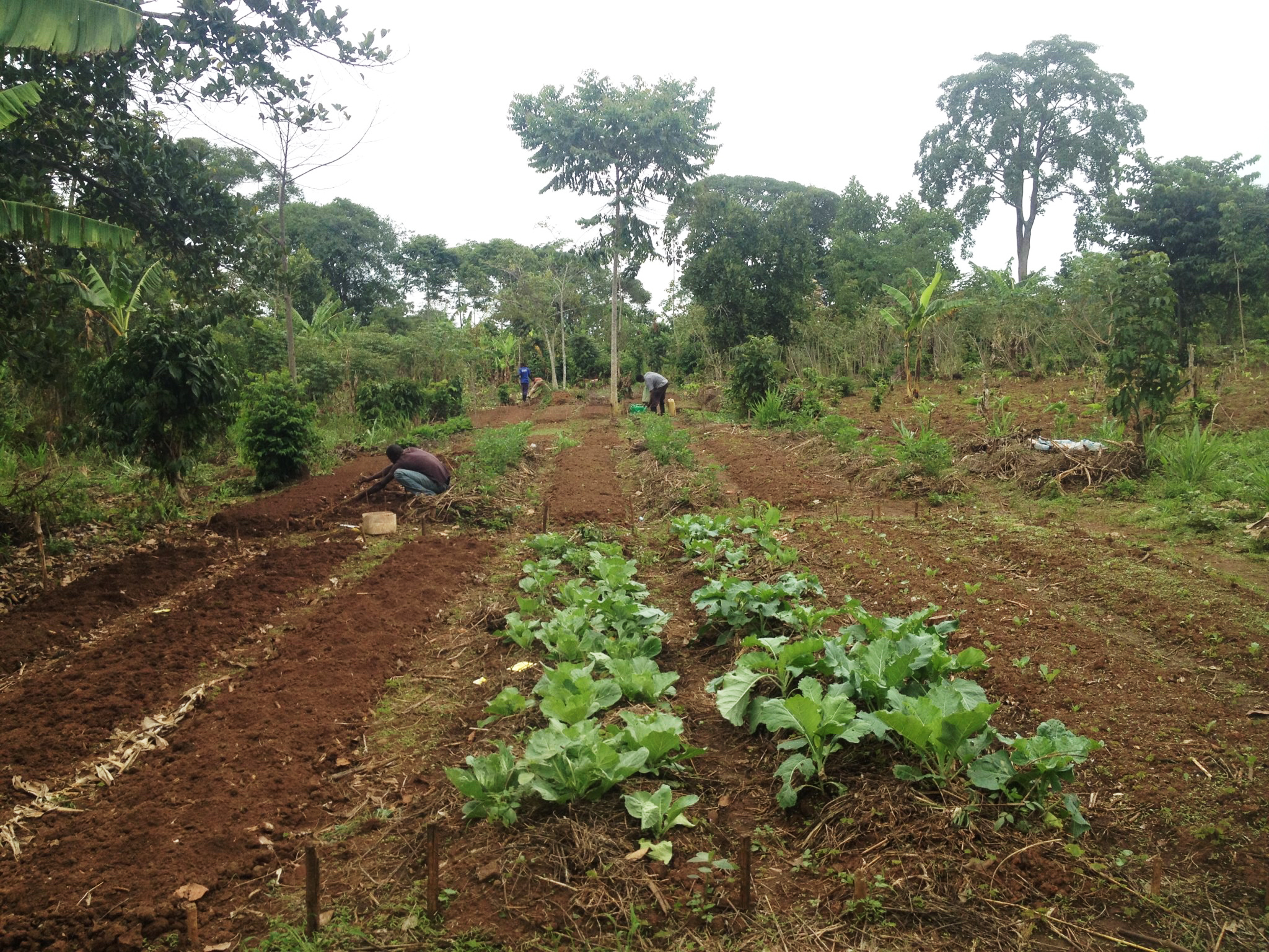 """The rainy season has just begun in Uganda, and our cooperatives tell us that that means """"more business,"""" i.e. there is so much to do!"""