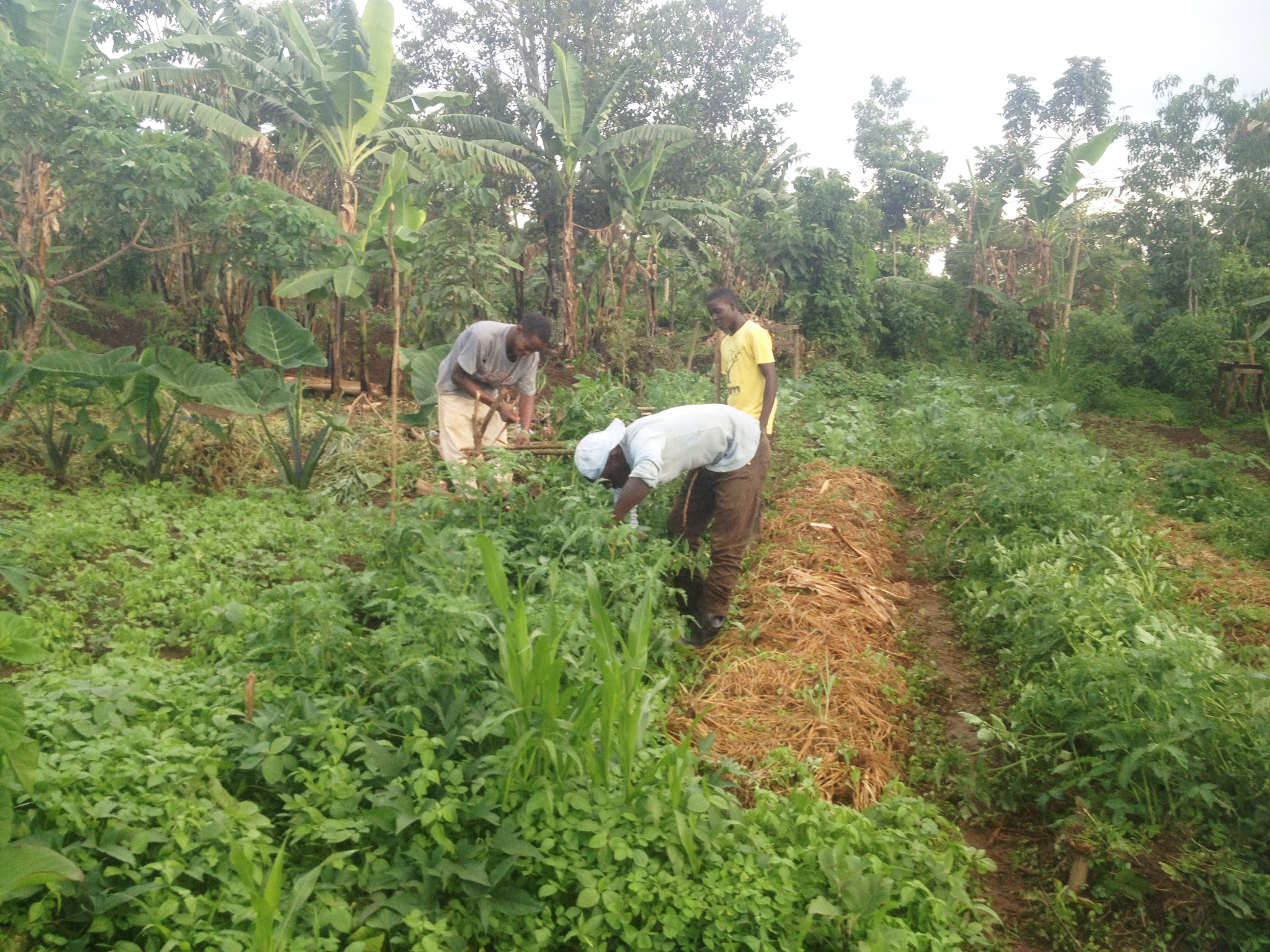 All students at the Institute for G.O.D. East Africa are involved in food production. The land is home to 44 beds.