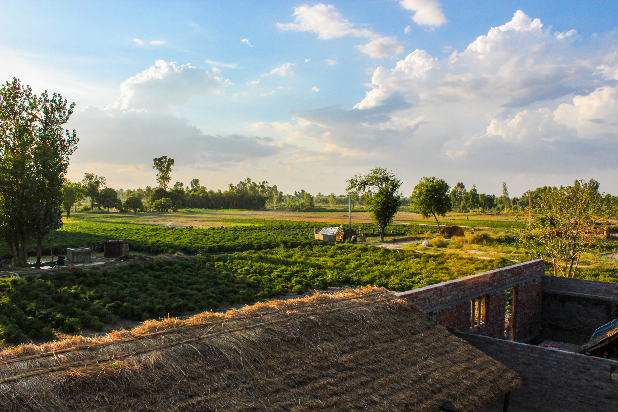 A picture of Santosh's land. This is where he and his neighbors grow food to sustain their families, a livelihood that is in danger of being taken awayfrom them.