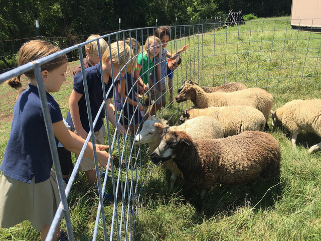 Young students learn the basics of animal care through caring for the sheep on the G.O.D. Int'l property.