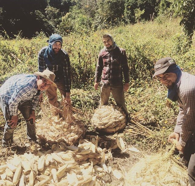 Later in their trip, immersion team participants worked alongside rural farmers to help them harvest corn at a much faster rate than they would have been able to without the help.