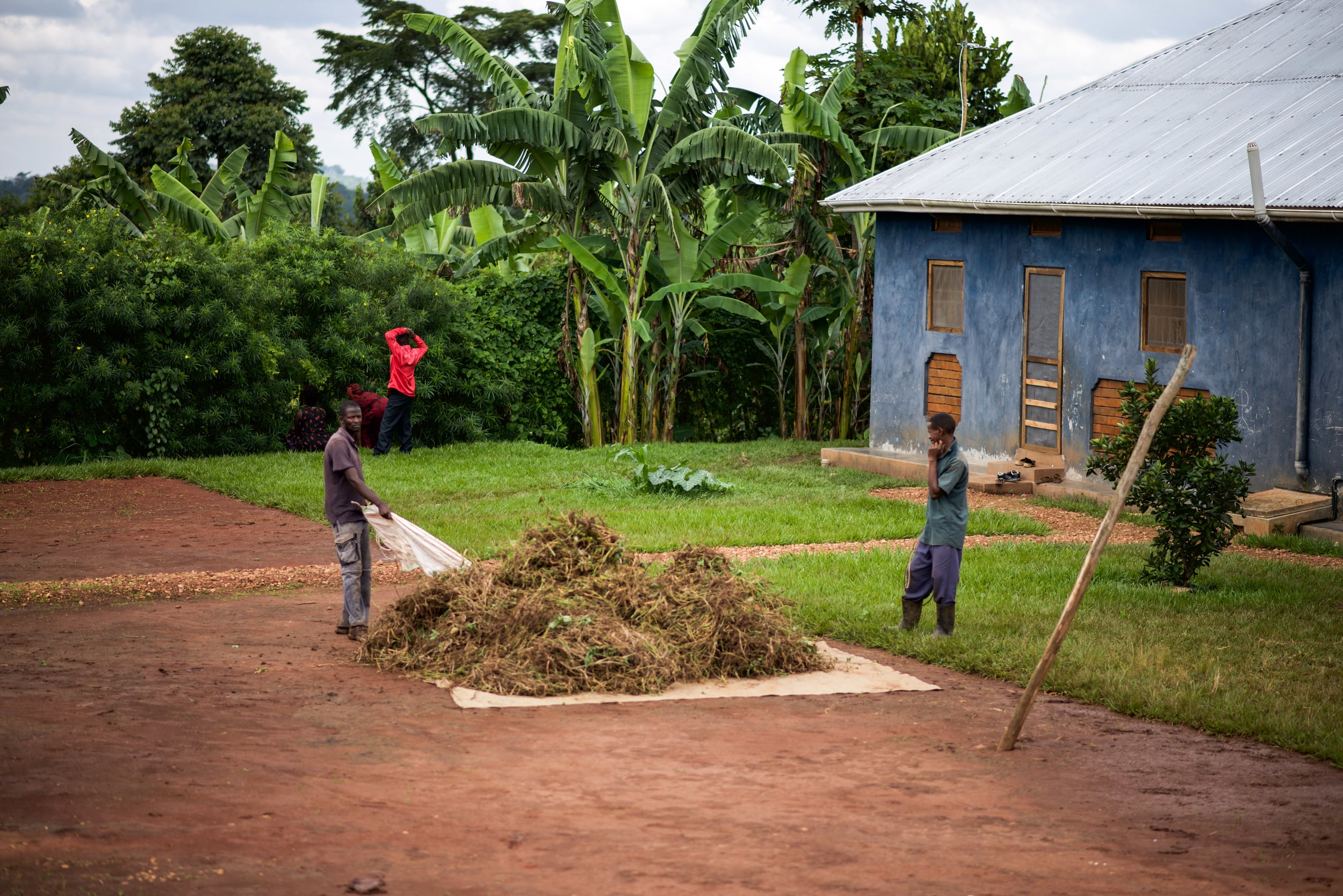 Students from the Institute for G.O.D. EA gather the grass clippings they combined after cutting with a scythe. They will use this for compost to encourage more growing.
