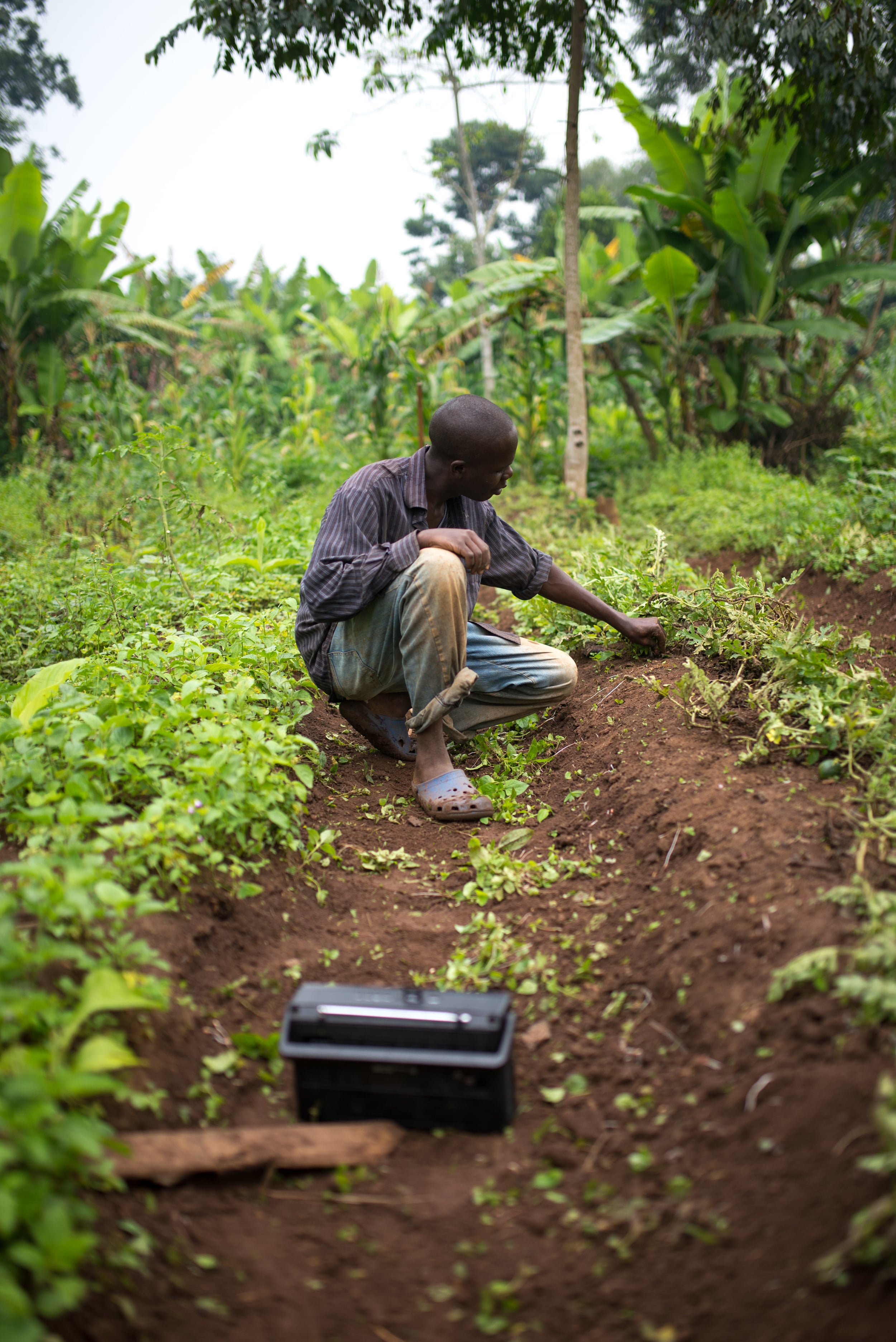 Our land in Uganda is quite fertile, but it still takes a lot of work to produce.