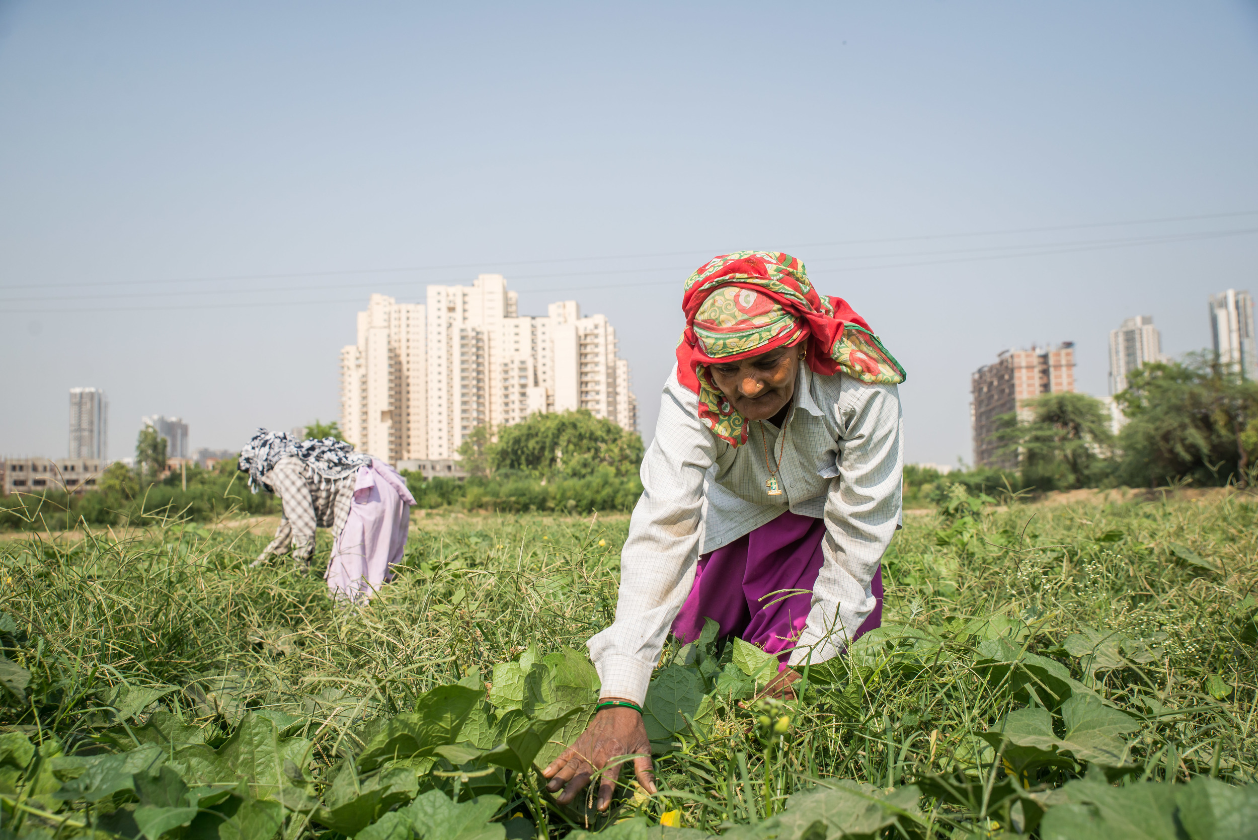 """The only remnant of her ancestral farmland is owned by an outsider, a man whose name she doesn't even know. Now, these two village women are employed to work 8 hours for $3.00 a day. """"We no longer grow our own food but have to go to the market to buy it,"""" she laments, """"and there is no strength in that food."""""""
