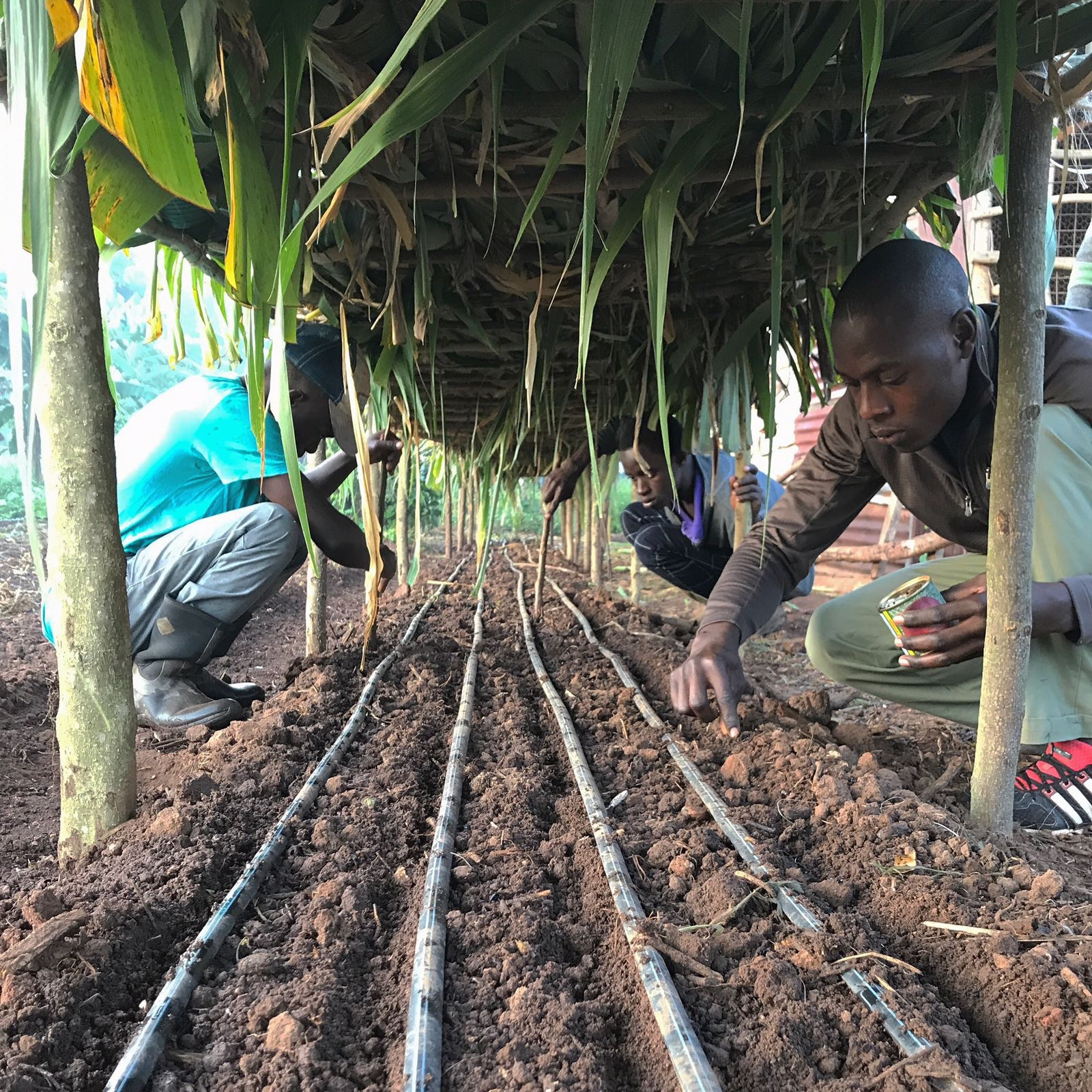 Students got hands-on experience with the practical side of the Institute, with agriculture being one of the focuses they can take at the Institute.