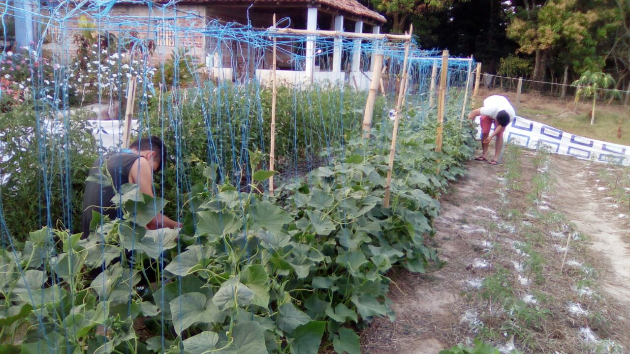 The demonstration garden on Campus is an example of the variety of crops that can be grown on one plot of land. This variety helps meet the nutritional needs of our team and the community.