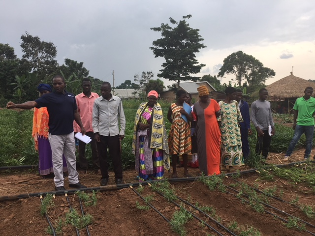 Francis Lubega shares about the process of crop rotation.