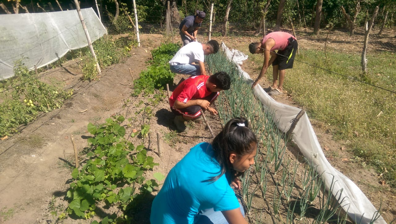 Students in our    Internship Program    work together as they learn how to care for an onion bed along with a variety of plants grown in the campus garden. These times are beneficial for students who have primarily observed mainstream farming practices in El Salvador.