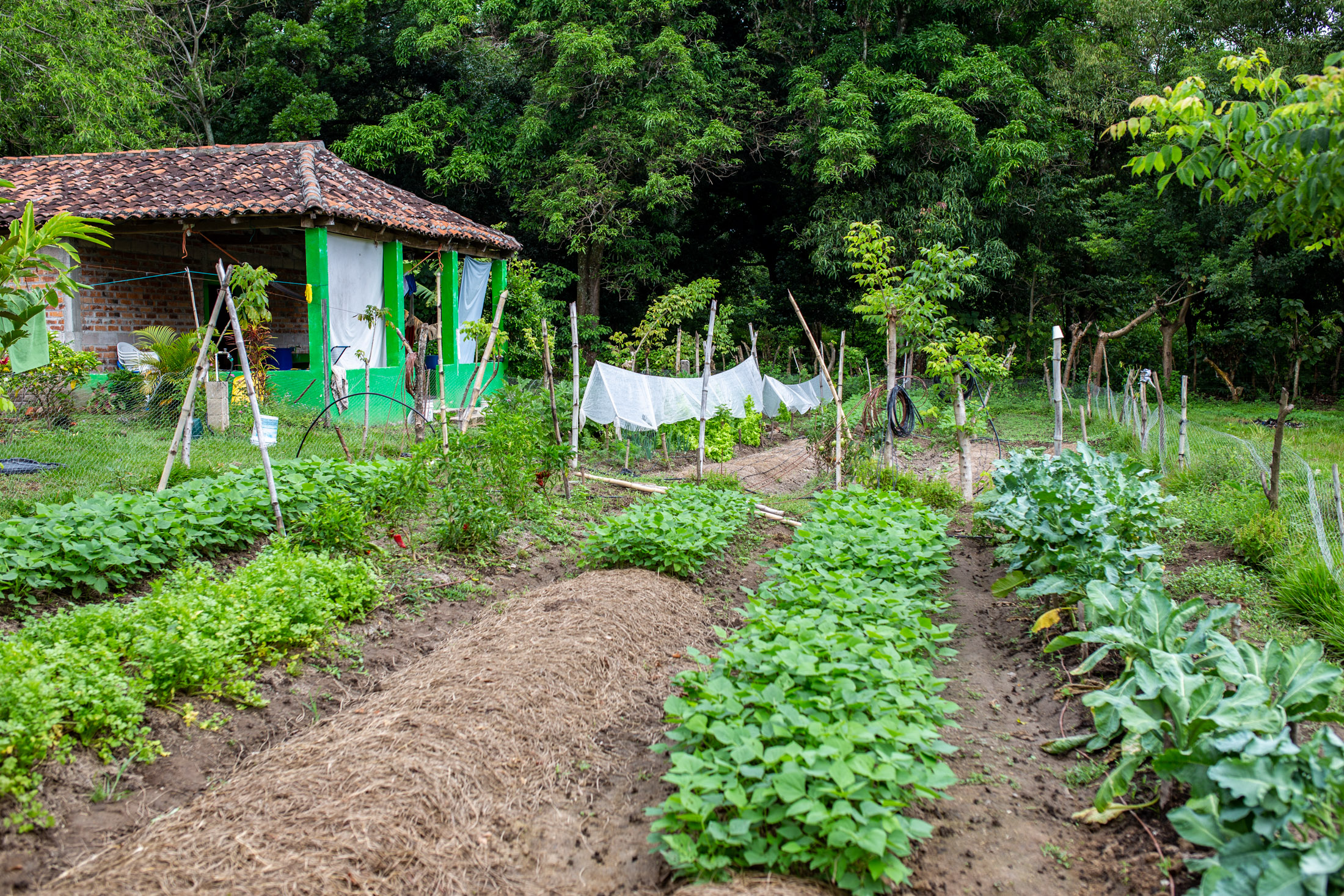 Neighbors believed the land on the campus in El Salvador was not capable of growing food because of the poor soil quality and the heavy use of chemicals on the plot prior to the Latin America Team's acquisition of the parcel. After soil remediation measures and the consistent use of chemical-free farming practices, today the land produces a variety of herbs, vegetables and fruit trees.