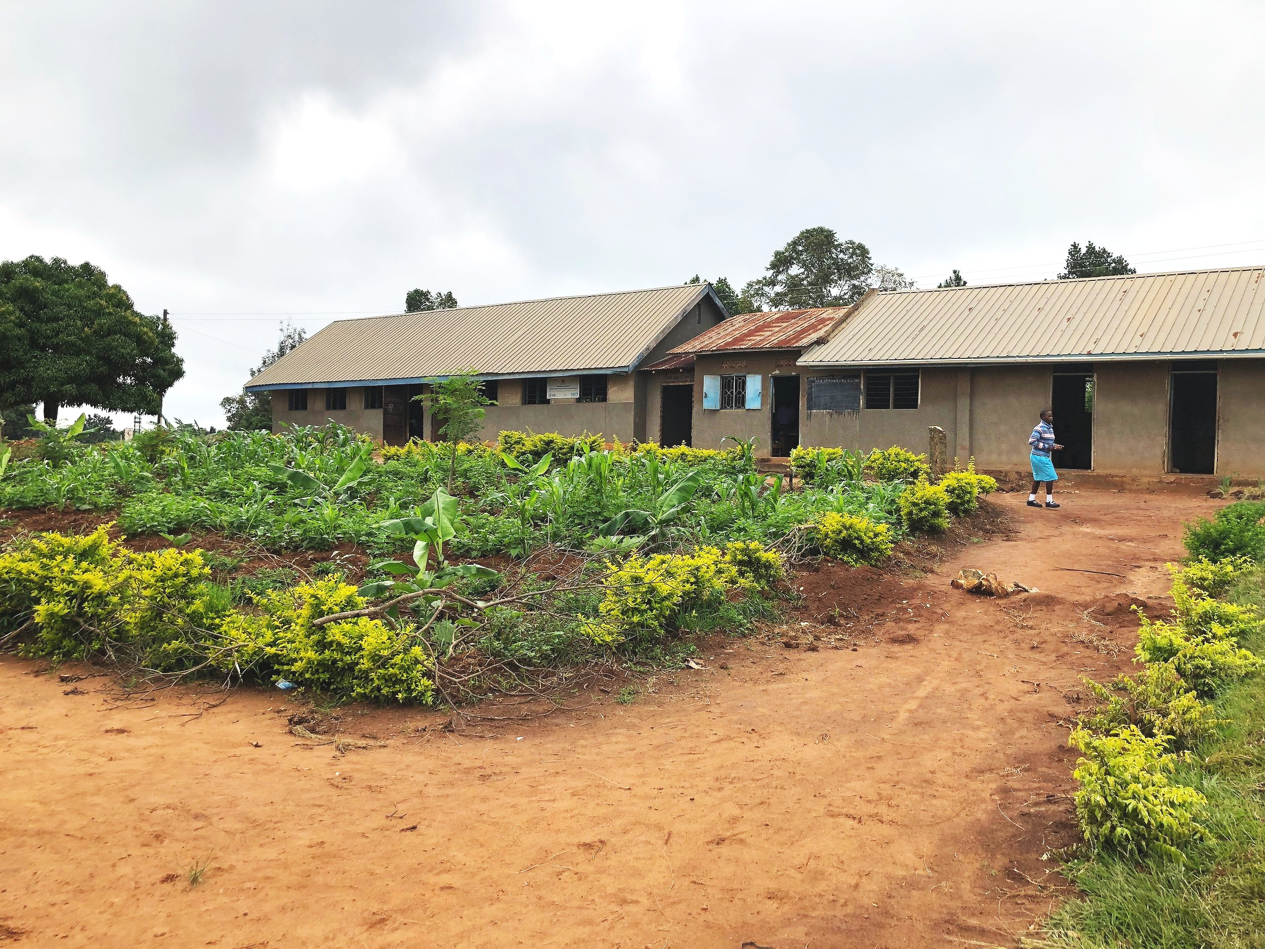 Grassy areas used to cover the center part of the school campus and alongside every building. Now, those areas are utilized to grow more produce to feed their students.