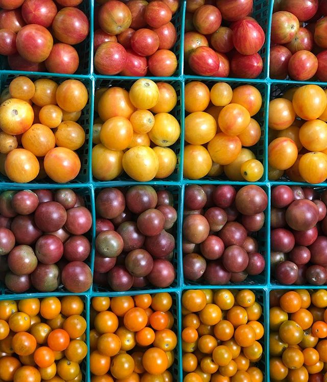 We always have our go-to's for cherry tomatoes: Sungold and Black Cherry. We also love trying new varieties each year. This year it is Pink Bumblebee and Sunrise Bumblebee from @highmowingorganicseeds. Enjoy them while they're here!