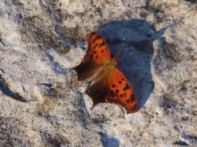 Butterflyopen_02