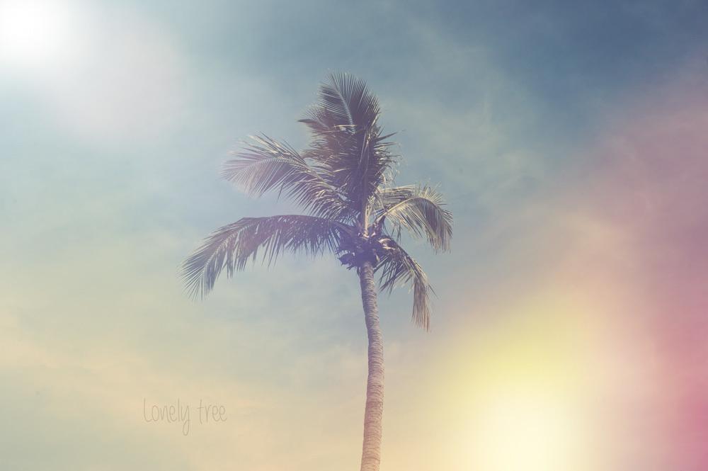 Ensam står palmen och vajar i vinden. Får mig drömma till nya mysiga resemål..