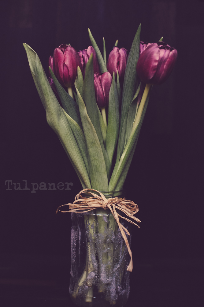 Vi fick så fina Tulpaner av ett par vänner i Fredags. Föresten visste ni detta om Tulpaner.                         Tulpan  eller  trädgårdstulpan  (  Tulipa gesneriana  ) är en växt i familjen  liljeväxter  . Arten har oklart ursprung, möjligen kommer den från  Asien  och har naturaliserats i sydvästra  Europa  de flesta odlingsformerna av tulpan härstammar från denna art