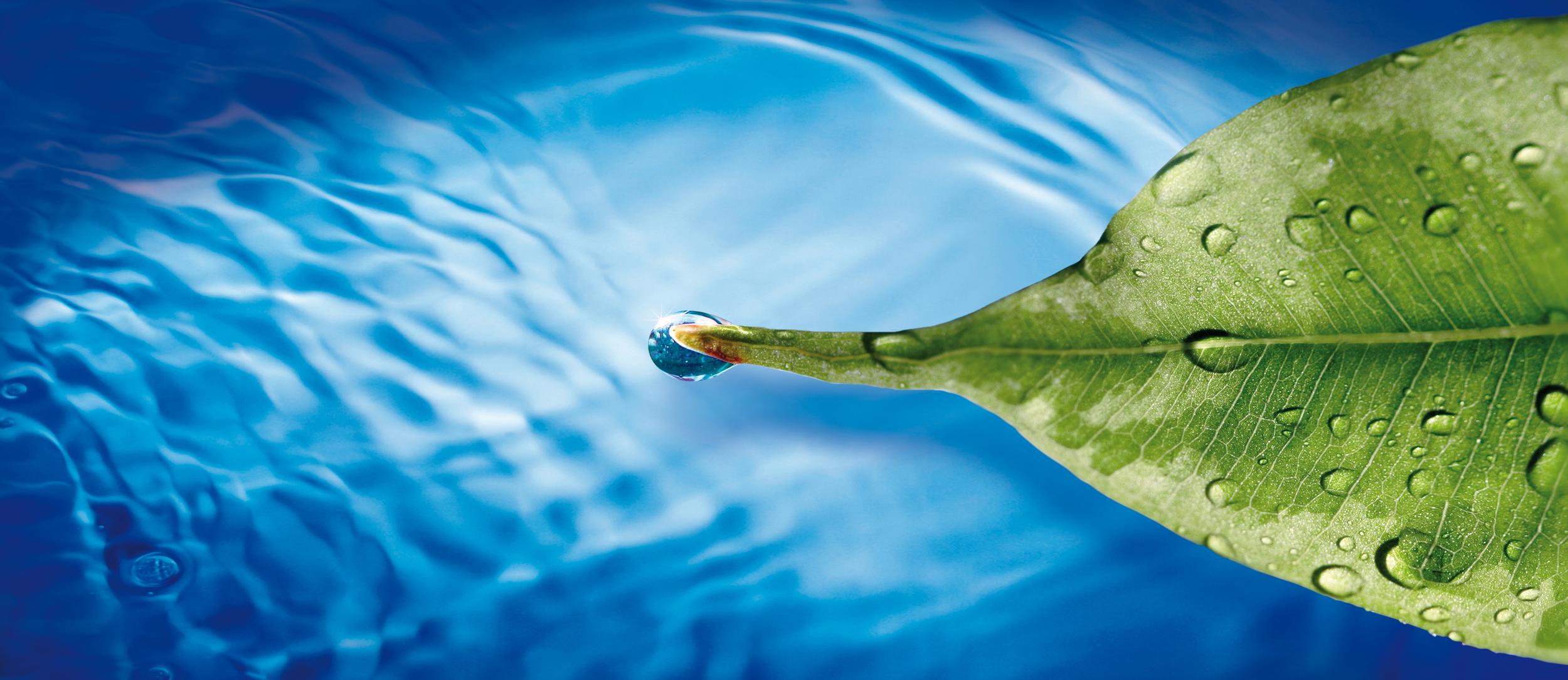 image-leaf-water reuse-quality.jpg