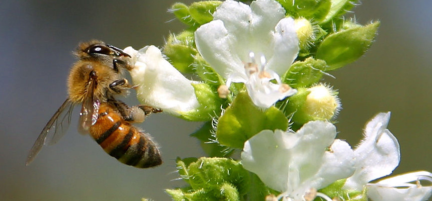 bee-on-flower-perennial[1].jpg
