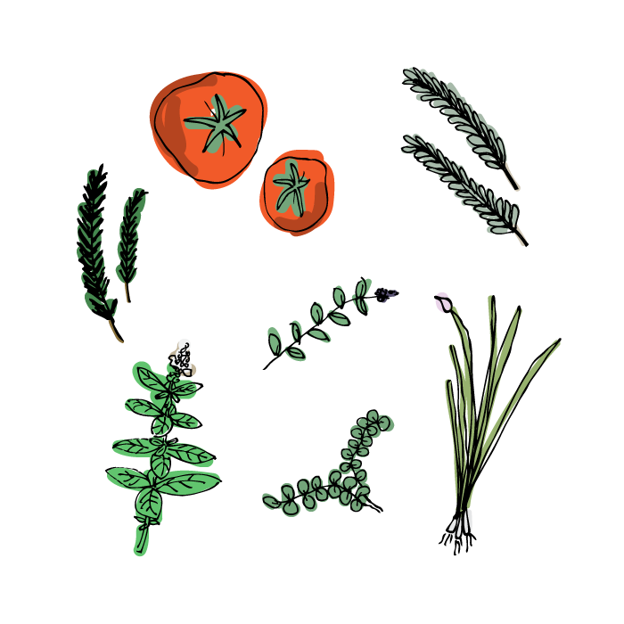 aug13_plants-1.png