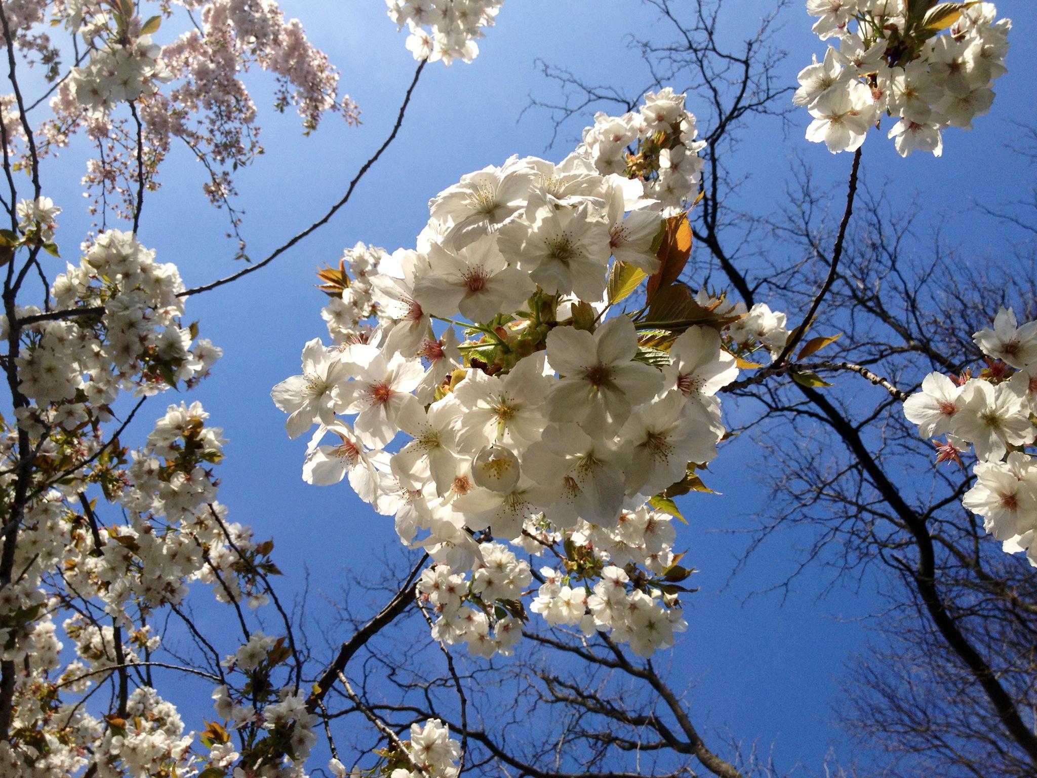 kellie blooms.JPG
